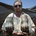Post Thumbnail of Hallan la primera y hasta ahora única esfinge egipcia en Israel
