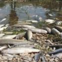 Post thumbnail of Culpan a ovni por muerte de dos mil peces en Colombia