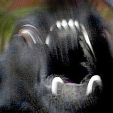 Post thumbnail of Un monstruo polimorfo perturba la calma en un poblado sudafricano