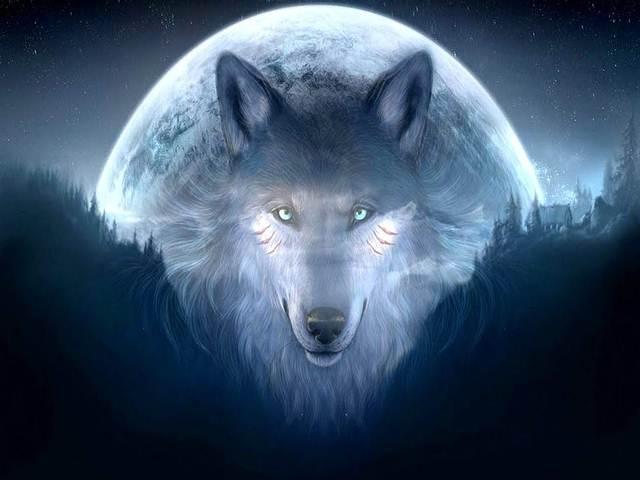 El Lobo es un guía y maestro, conductor de las almas para las más variadas culturas.