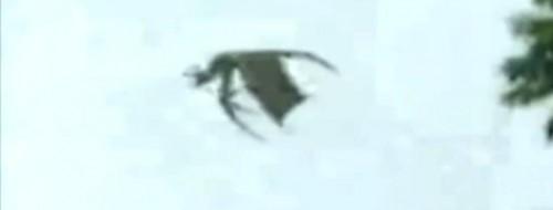 mothman-chile1