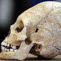 Post thumbnail of Descubren en Francia un cráneo alargado de hace 1.500 años