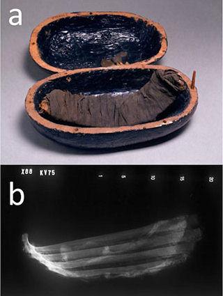 Mmm... costillas. Este costillar de carne de res fue encontrado en la tumba la noble egipcia Tjuiu y su cortesana Yuya, datado entre el 1386 a.C. y el 1349 a.C.