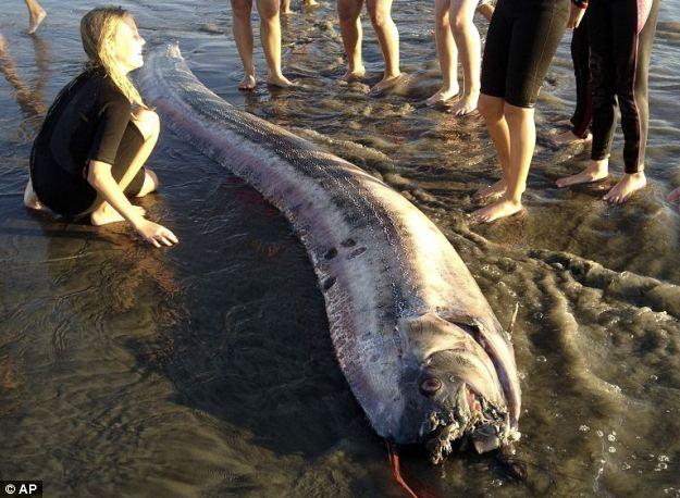 Pez remo hallado sin vida en la costa de California.