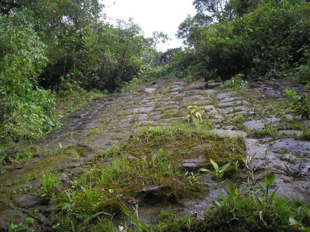 Foto de la estructura literalmente comida por la selva.