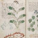 Post Thumbnail of El misterioso 'manuscrito de Voynich' podría ser un antiguo libro de los aztecas
