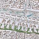 Post thumbnail of Descifran diez palabras del misterioso libro de Voynich