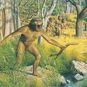 Post Thumbnail of Ancestro humano datado en 3 millones de años