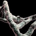 Post thumbnail of Los humanos podrían colonizar el espacio enviando ADN a planetas distantes para «imprimir» nuevas civilizaciones