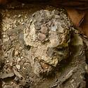 Post thumbnail of Científicos redescubren a «Noé», un individuo de hace 6,500 años que sobrevivió al Diluvio Universal
