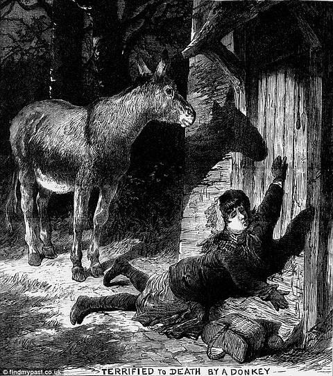 killer_donkey