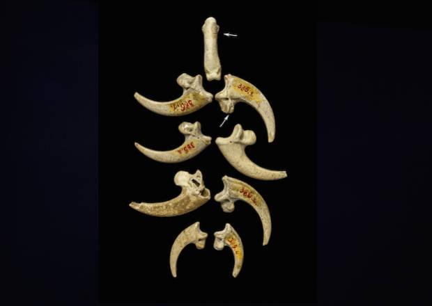 neandertales-joyas