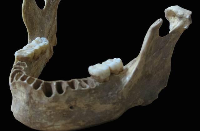 La mandíbula del humano hallado en Rumania con casi un 10% de ADN neandertal.