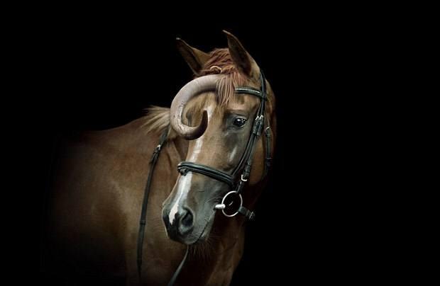 Uno de los híbridos consistía en un caballo con un cuerno de vaca en su frente.