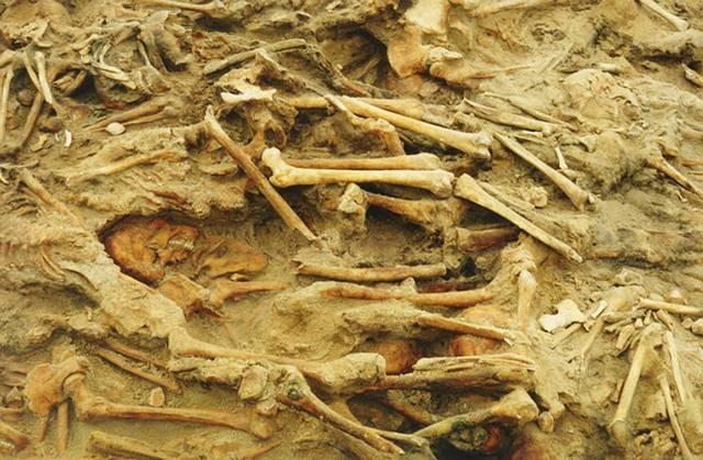 Restos de varios soldados napoleónicos hallados en una fosa común en Lituania.