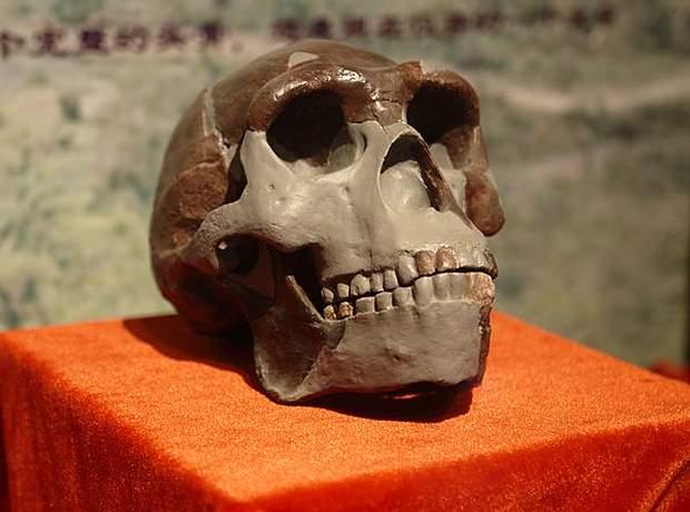 Réplica de un cráneo del hombre de Pekín en el Museo Paleozoológico de China.