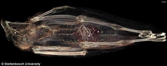 Escaneo de SACHM 2575.