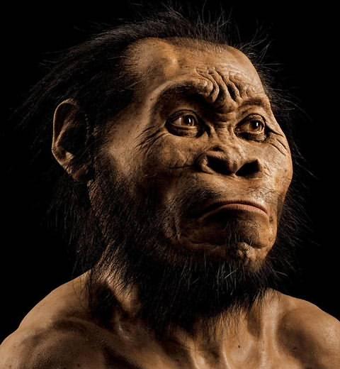 Reconstrucción del rostro del nuevo integrante de la familia humana. Su capacidad craneal era de unos 500 cm. cúbicos (muy inferior a los 1.200 cm cúbicos de los humanos actuales).