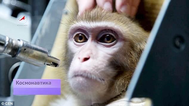 monos-en-el-espacio