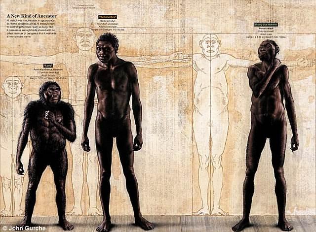 Comparación entre Australopithecus afarensis (izquierda), Homo erectus (centro), y Homo naledi (derecha).