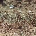 Post thumbnail of El primer ser humano muerto por un meteorito