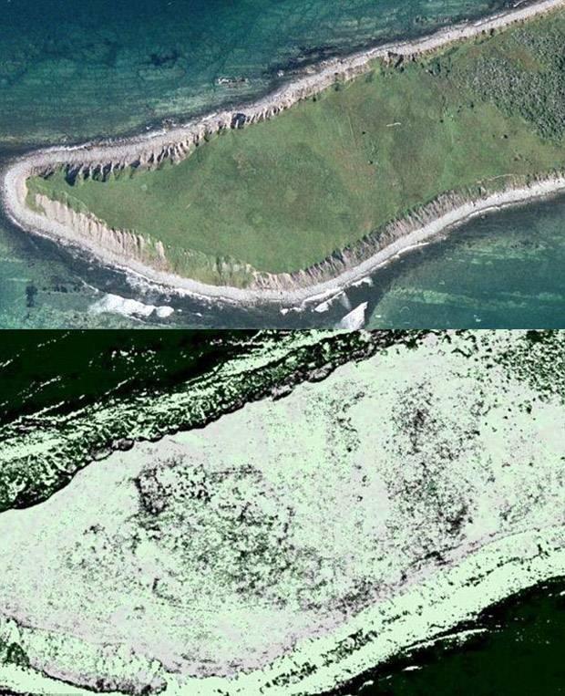 Los investigadores descubrieron el asentamiento al buscar patrones en imágenes satelitales que indicaran restos de construcciones antiguas en Terranova. Por medio del infrarrojo (abajo) fueron capaces de divisar lo que creen son hogares comunales similares a los utilizados por los vikingos.