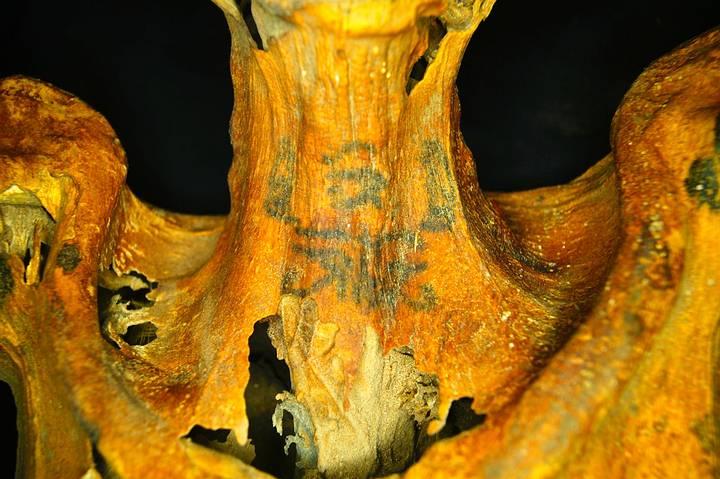 Tatuaje en el frente del cuello. Dos babuinos sentados flanquean el ojo de Horus (también llamado Wadjet), un símbolo de protección.