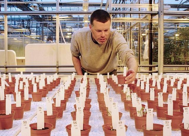 Wieger Wamelink muestra los cultivos en suelo «marciano».
