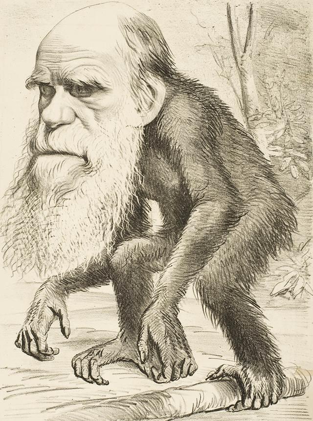Esta imagen satírica de Darwin como simio, de 1871, refleja parte de la controversia social suscitada sobre el hecho que los humanos y los simios compartimos linaje.