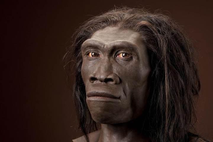 Varios grupos de investigadores están analizando restos de 'Homo erectus' (foto) para comprobar si el nuevo homínido formaba, en realidad, parte de esta especie. Hasta ahora no se ha encontrado evidencia sólida al respecto.