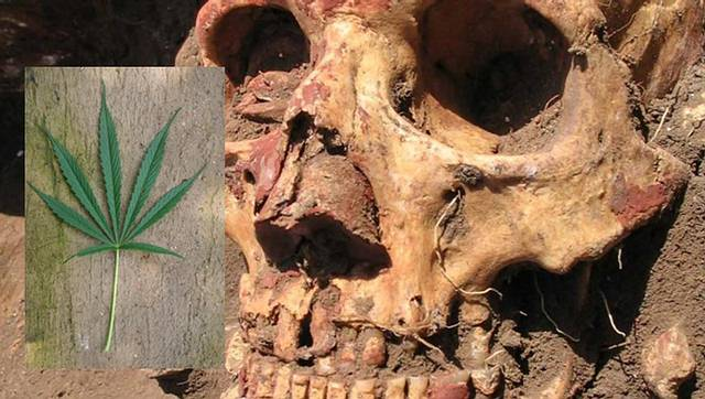 Cráneo de un individuo de la cultura Yamna.
