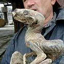 Post thumbnail of Mineros hallan la momia de un «monstruo bebé» en Siberia