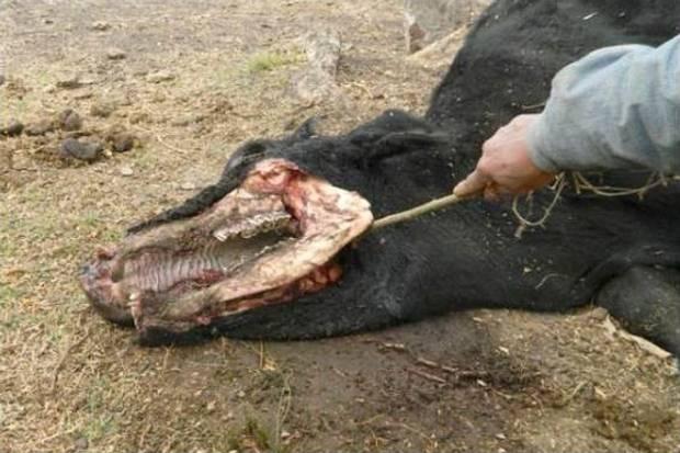 mutilaciones-ganado-arch