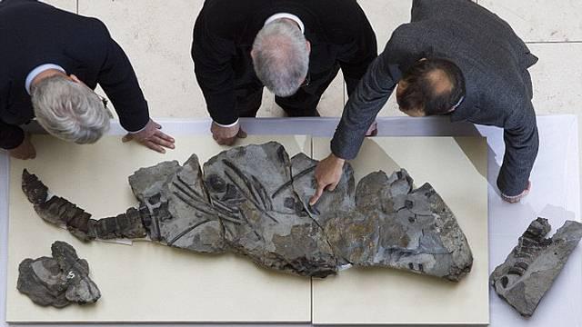 ictiosaurio-fosil