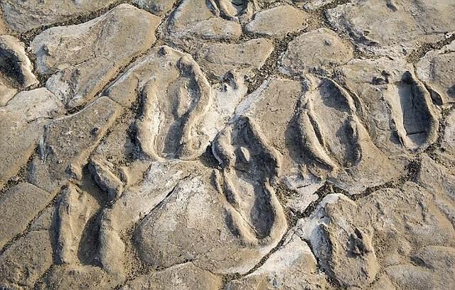 worlds-oldest-footprints2