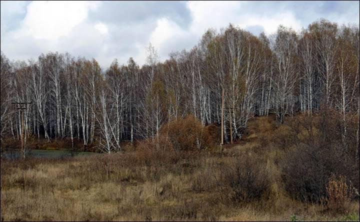 Bosque en los alrededores de Bespyatovka.