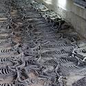 Post thumbnail of Desentierran un lugar donde los emperadores chinos realizaban «baños de sangre»