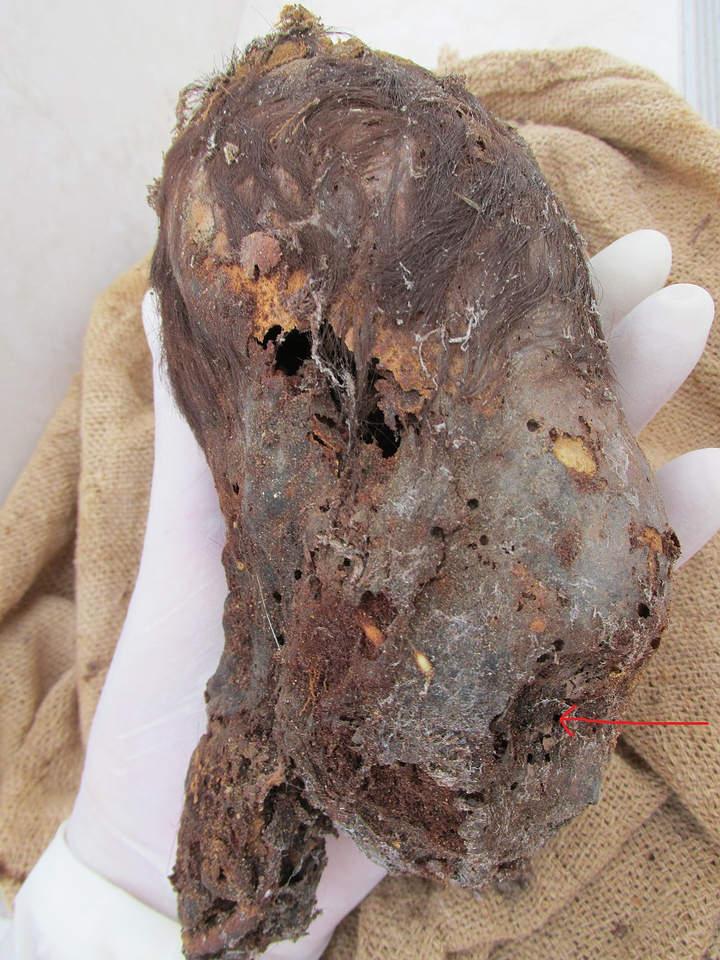 Parte posterior del cráneo.