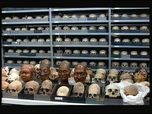 craneos-museo-lima1