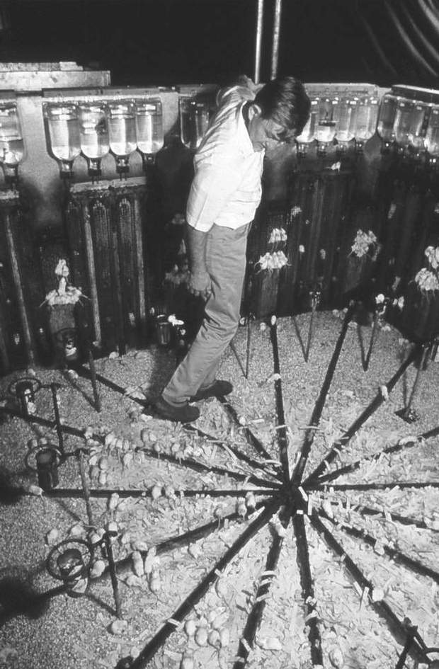 John Calhoun dentro del experimento con ratones.