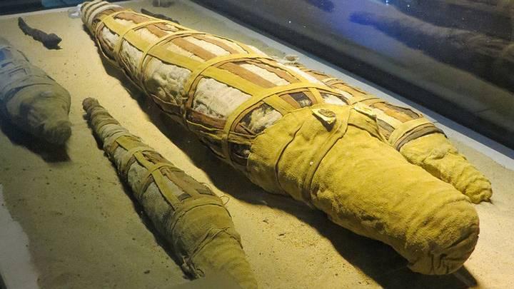 cocodrilo-momificado