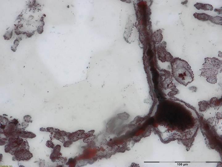 Microfósiles en capas de cuarzo del sitio geológico del cinturón Nuvvuagittuq.