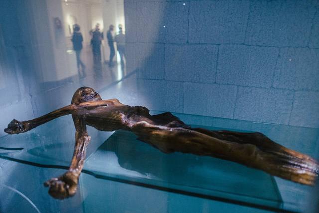 Existen pocas momias en el mundo con tanta antigüedad, aunque ninguna está tan bien conservada como la de Ötzi. Crédito: Dmitry Kostyukov / The New York Times.
