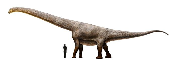 Titanosauria es un clado de dinosaurios saurópodos macronarios, que vivieron desde el período Jurásico hasta el Cretácico, en lo que hoy es Asia, América, Europa, África y Australia.