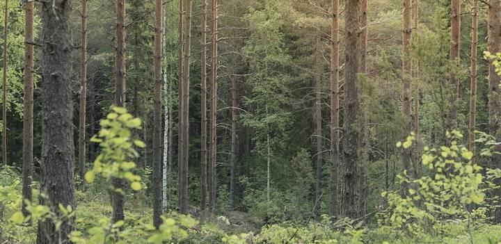 biodiversity-wood