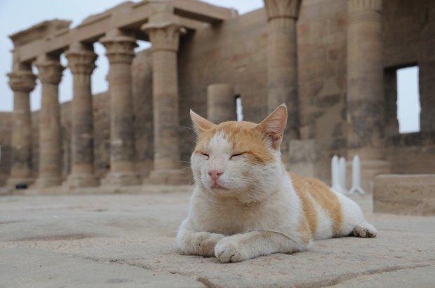 cat-egypt-temple