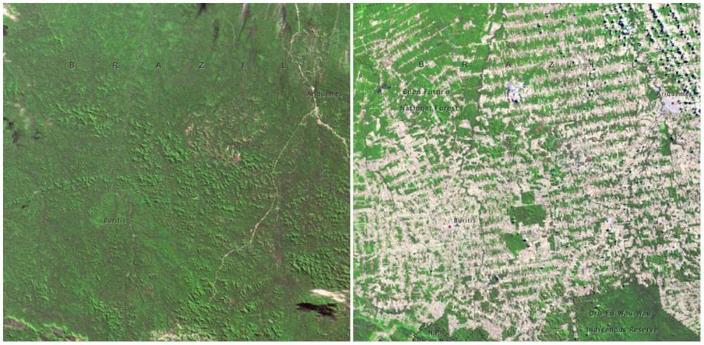 bosques-brasil