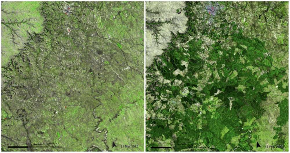 bosques-uruguay