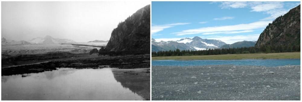 glaciarbear-alaska