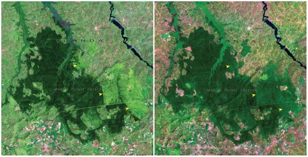 uganda-forest